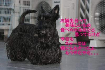 a_20090410220301.jpg