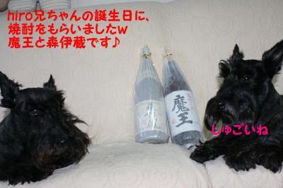 a_20091019224128.jpg