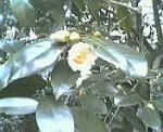 200601o.jpg