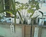 200611yasukuni32.jpg