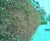 benikaname2005.jpg