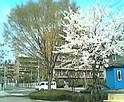 daia2005b.jpg