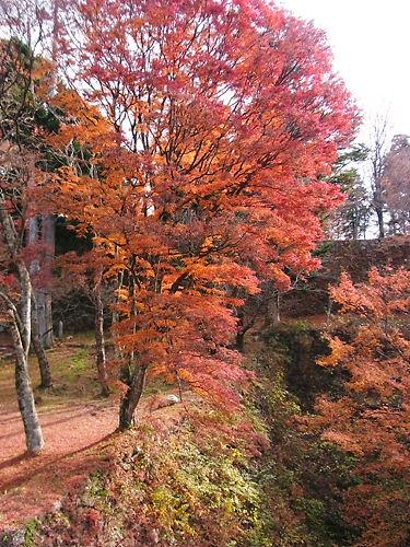 高取城の紅葉
