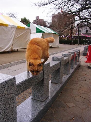 蓮馨寺ニャンコ