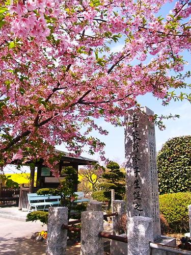 荻野吟子生誕の地と桜