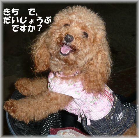 奈良・モカ