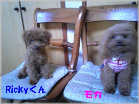 Rickyくん&モカ