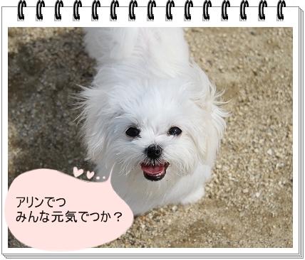 笑顔1-1