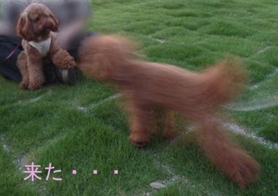 モコ&フィフィ