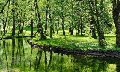 ネイチャー 自然 緑 川