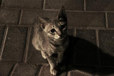 猫 夜 見上げる 目