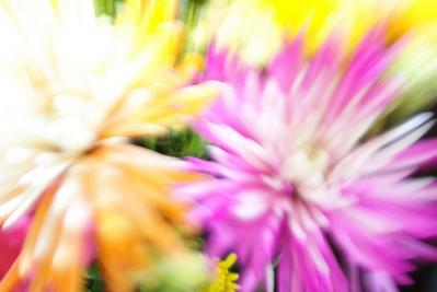 花 ブレ 勢い 色 増加