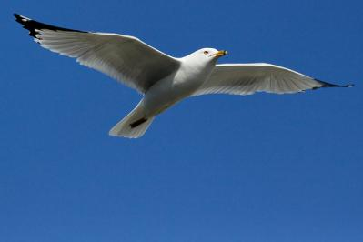カモメ 空 鳥 飛ぶ 見上げる