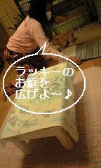 lucky4_0007.jpg