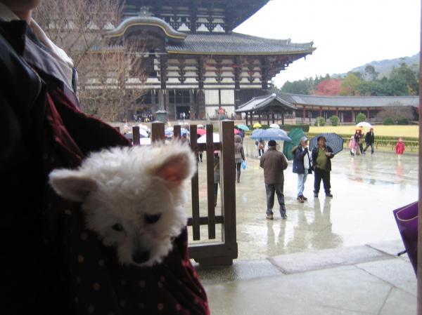東大寺とモカ