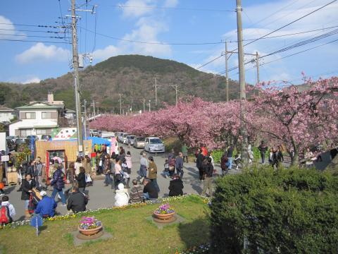 20110306002河津桜