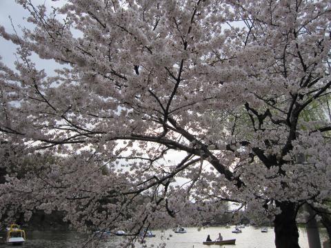 20110410001桜