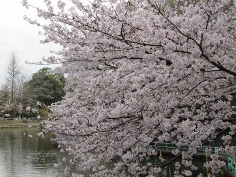 20110410004桜