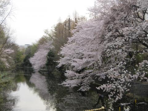 20110410005桜