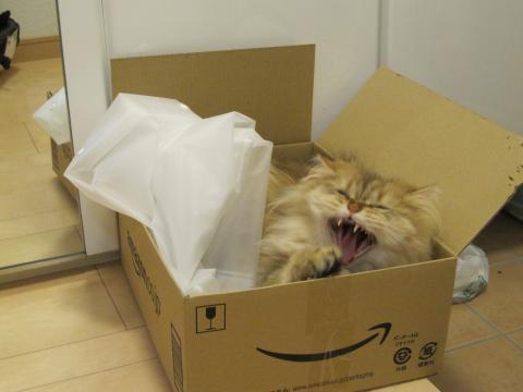 20110612001箱とネコ
