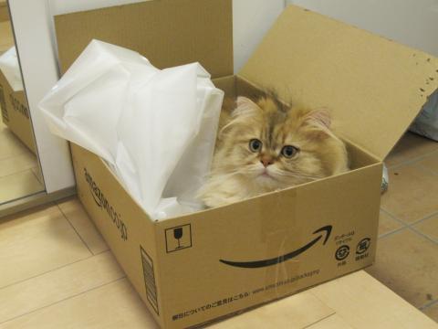 20110612002箱とネコ