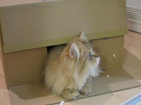 20110612004箱とネコ