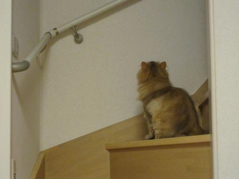 20110619003気になるネコ