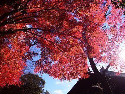 寂光院の紅葉1