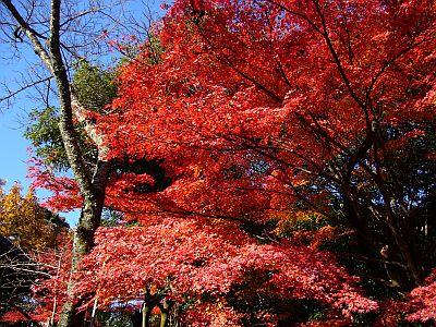 寂光院の紅葉2