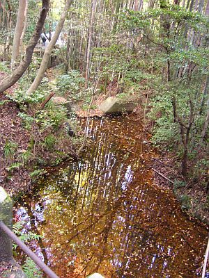 水溜りに映った紅葉