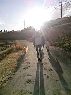 ハニーのお散歩