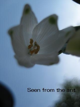 蟻から見たら