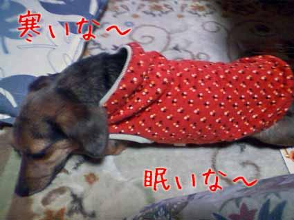 寒いな~眠いな~