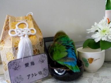 20111032805.jpg
