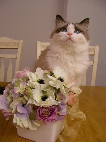 お花ともも