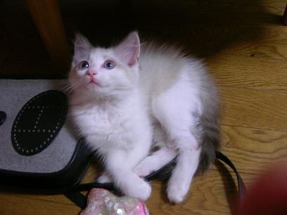 赤ちゃんムーニ3