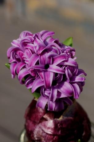 紫も咲きました♪