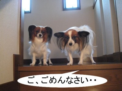 2008-11-22 15-39-01