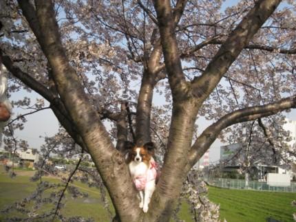 2009-04-05 16-09-01 640x480