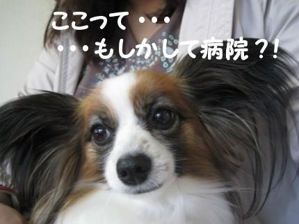 2009-04-09 10-55-01 640x480