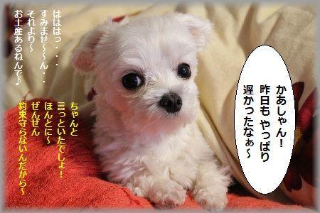 11.4.29きのう ②