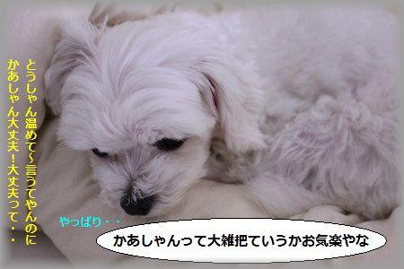 11.5.30ぎゅうにゅう ①
