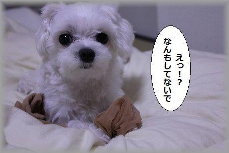11.6.10えっ 1