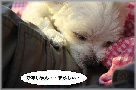 11.6.19まぶしい ①