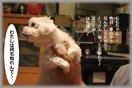 11.6.21わつぃは ①