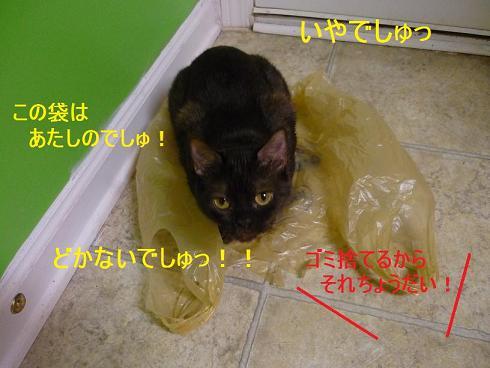 fukuro_20090528212243.jpg