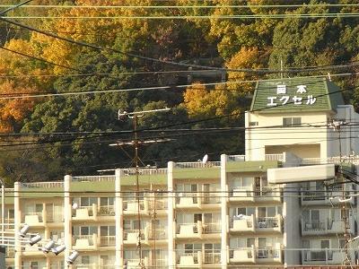 okamoto-e-3.jpg