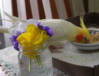 花とナツキWEB