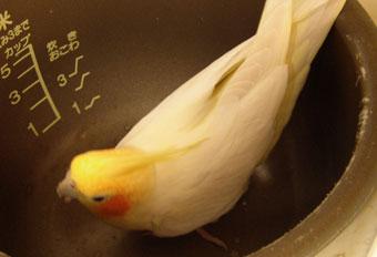 炊飯器ナツキ