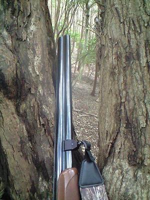 森のたね 富士山田舎暮らし 狩猟中